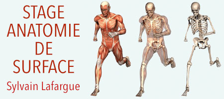 STAGE ANATOMIE DE SURFACE